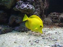 Fishy Fishy Fishy. Three aquarium fish in lit tank in zoo Royalty Free Stock Image