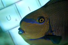 Free Fishy Keyboard Stock Image - 55281