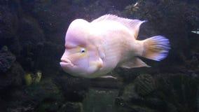 Fisk royaltyfria foton