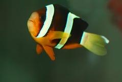 fisk Royaltyfria Bilder