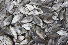 fisk Arkivbild