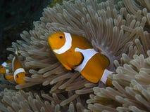 fisk Royaltyfri Fotografi