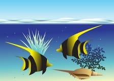 Fisk. Royaltyfri Bild