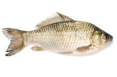 fisk Arkivfoton