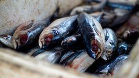 Fisk fotografering för bildbyråer