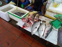 Fisk för försäljning royaltyfria foton