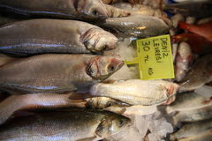 Fisk för sittpinne för fiskmarknad Arkivfoton