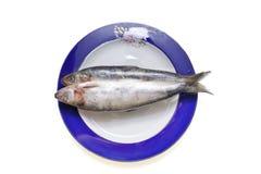 fisk fryst isolerad plattashad Royaltyfri Fotografi