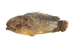 fisk grillat salt Royaltyfria Foton