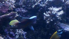 Fisk i akvariet arkivfilmer