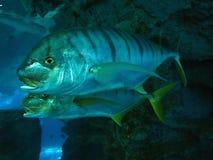 Fisk i akvariet - Chester ZOO arkivbild