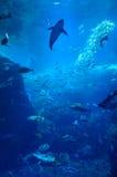Fisk i akvarium Royaltyfri Foto