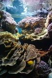 Fisk i akvarium i Frankrike Royaltyfri Foto