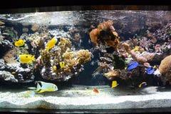Fisk i akvarium i Frankrike Arkivfoto