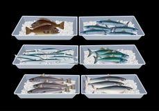Fisk i behållareaskar royaltyfri illustrationer
