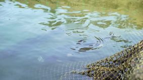 Fisk i dammet och fiske stock video