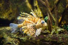 Fisk i det marin- akvariet royaltyfri foto