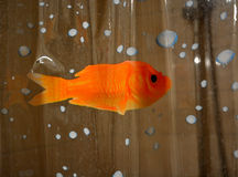 Fisk i din dusch Arkivfoton