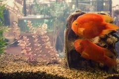 Fisk i en behållare Arkivbild