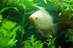 Fisk i en fiskbehållare Arkivbilder