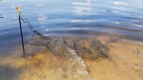 Fisk i ett fisknät stock video