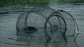 Fisk i ett raster stock video