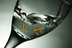 Fisk i exponeringsglas Arkivbild