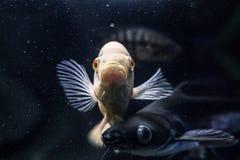 Fisk i fiskbeh?llare royaltyfri bild