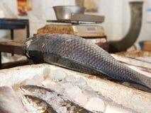 Fisk i fiskmarknad Royaltyfri Bild