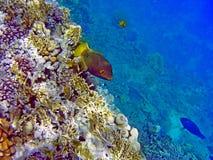 Fisk i havet Royaltyfria Foton