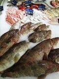 Fisk i isen på räknaren Royaltyfri Foto
