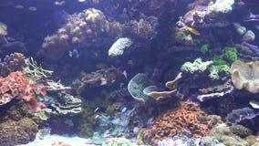Fisk i korallrev stock video