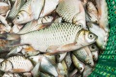 Fisk i marknaden Arkivbild