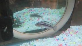 Fisk i mirrior Royaltyfri Fotografi