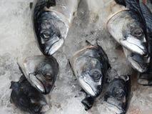 Fisk i is på marknaden Fotografering för Bildbyråer