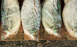 Fisk i plastpåsen Royaltyfri Bild