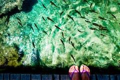 Fisk i Plitvice sjöarna i Kroatien Fotografering för Bildbyråer