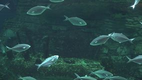 Fisk i Undersea grotta arkivfilmer