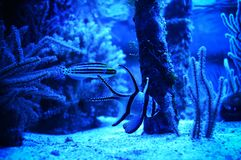 Fisk i zooen arkivfoto
