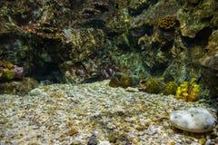 fisk med korall och vatten- djur royaltyfria bilder