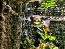 Fisk med tänder Royaltyfri Bild