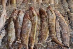 Fisk någon Royaltyfria Foton