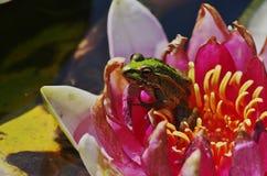 Fisk och blad av lotusblomma Arkivbilder