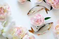 Fisk- och blommabakgrund Arkivfoton