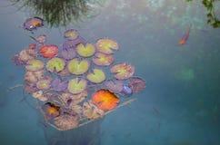 Fisk och jätte Lily Pads i en sjö Arkivbilder