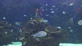 Fisk och korall i akvarium stock video