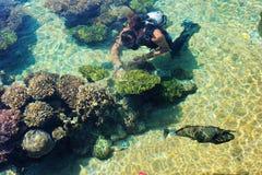 Fisk och koraller av Röda havet royaltyfri bild
