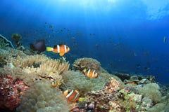 Fisk och korallrev royaltyfria foton