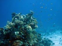 Fisk och korallrev i Röda havet Arkivfoton