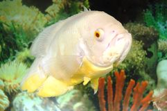 fisk oscar royaltyfri fotografi